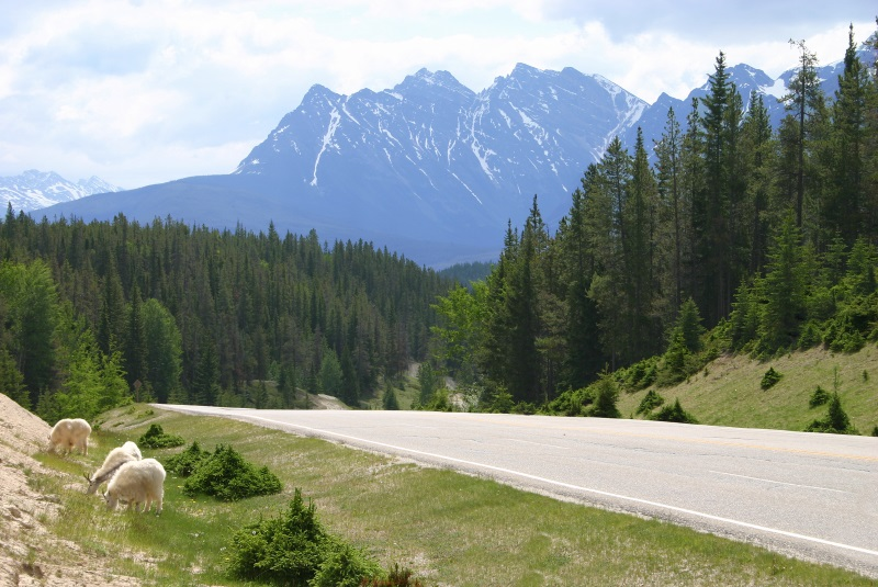 Canadese Rockie Mountains