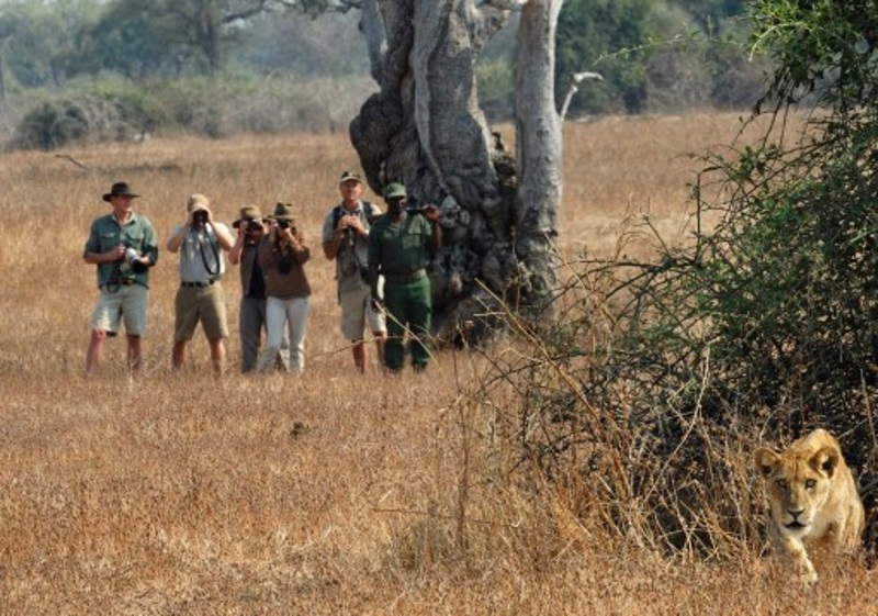 wandelsafari in Zambia