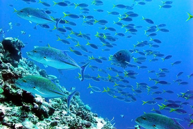 mooiste duikspots van de wereld