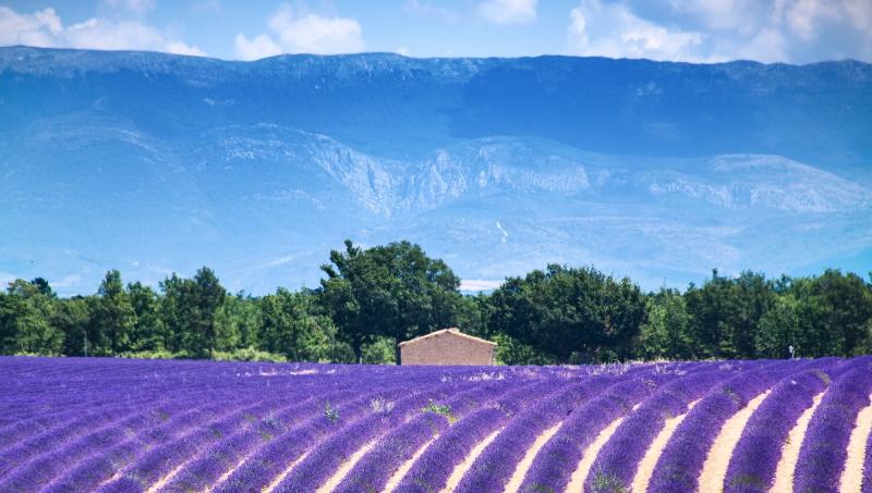 binnenland provence lavendel velden