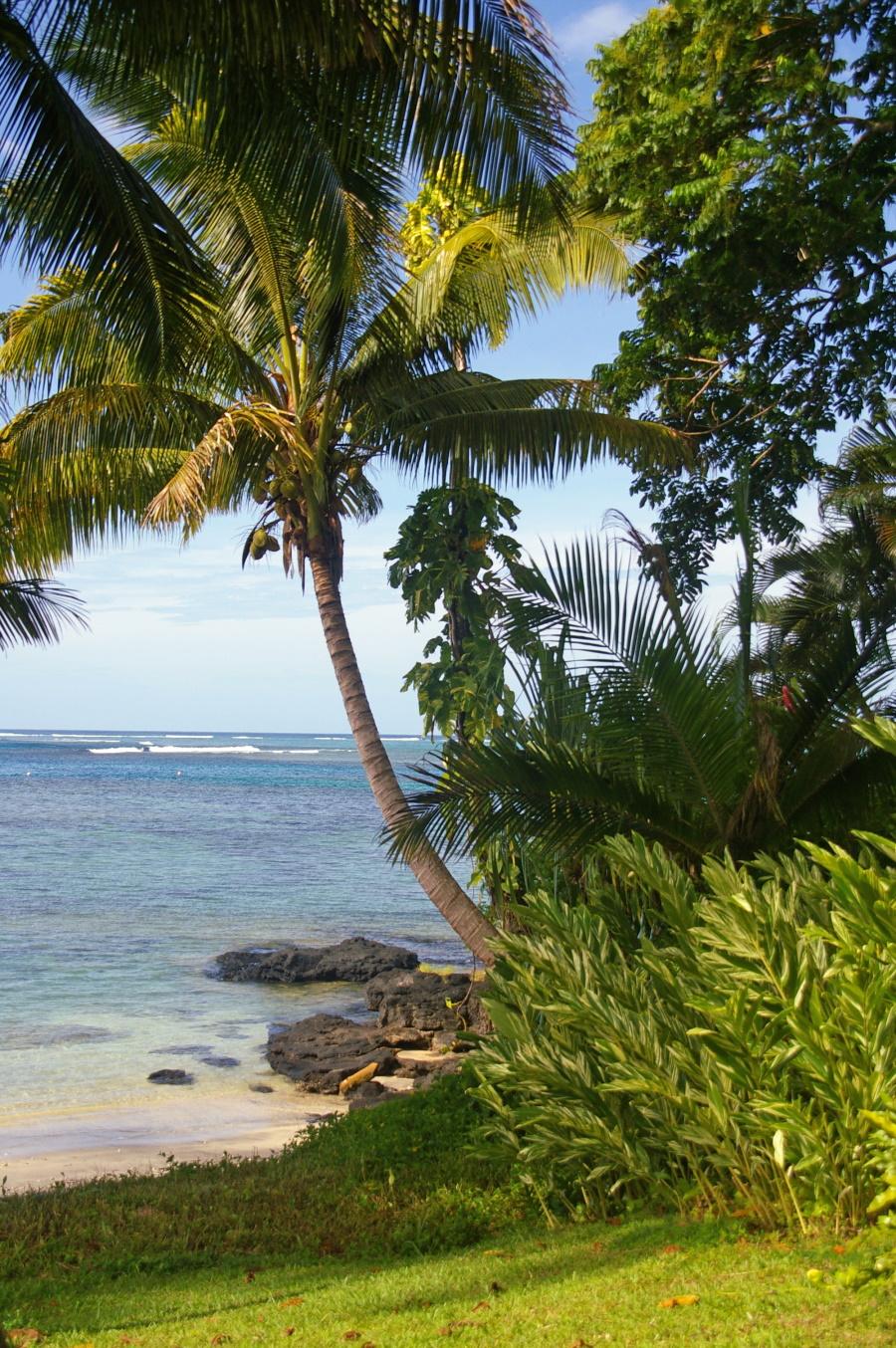 Wuivende palmen op Samoa.